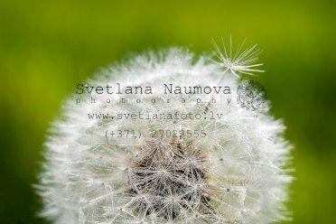 Fotogrāfe Svetlana Naumova